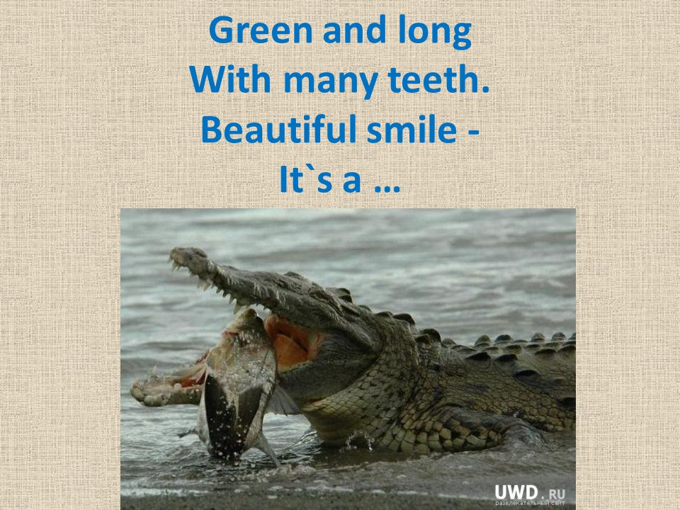 Green and long With many teeth. Beautiful smile - It`s a …