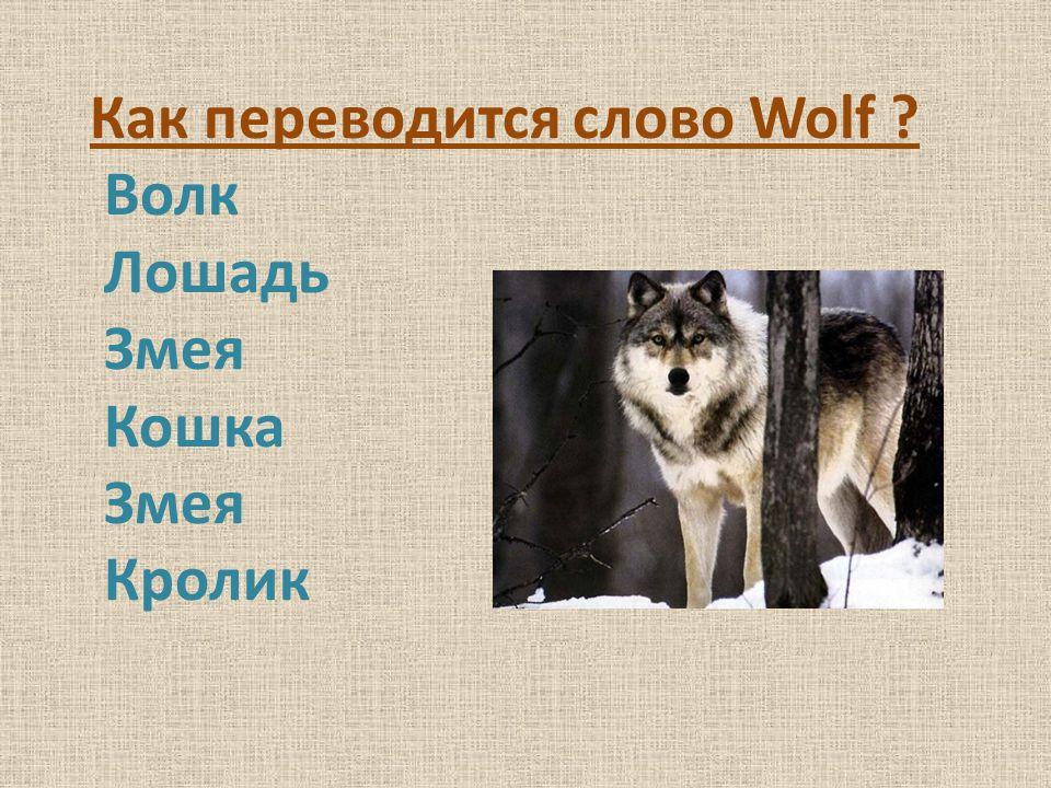 Как переводится слово Wolf ? Волк Лошадь Змея Кошка Змея Кролик