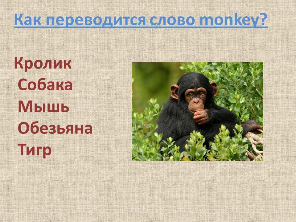 Как переводится слово monkey? Кролик Собака Мышь Обезьяна Тигр
