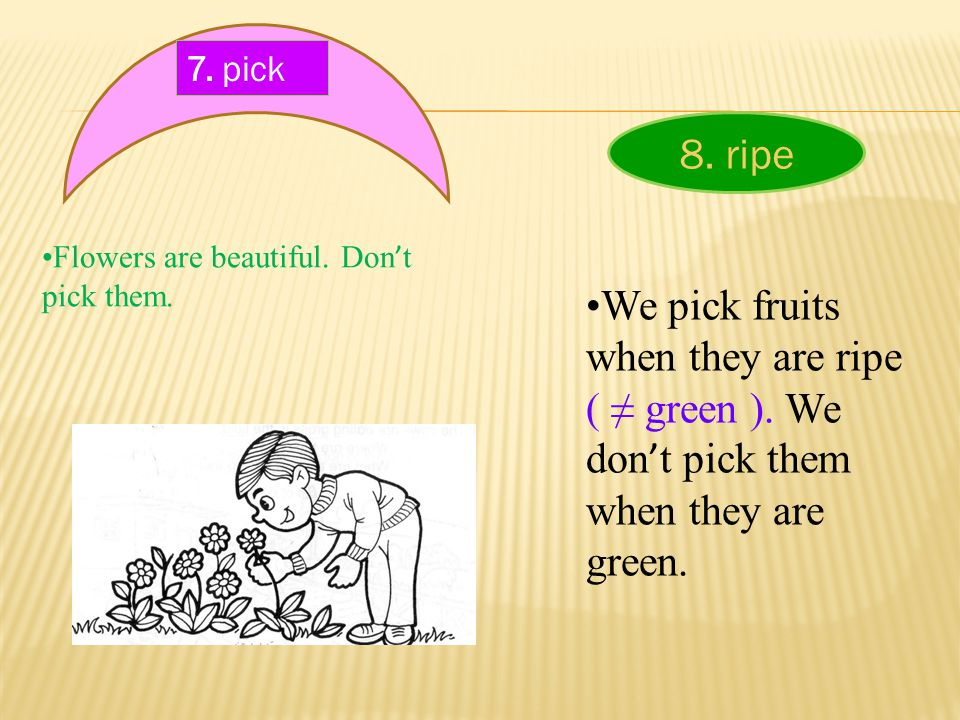 7. pick Flowers are beautiful. Don ' t pick them. 8. ripe We pick fruits when they are ripe ( ≠ green ). We don ' t pick them when they are green.
