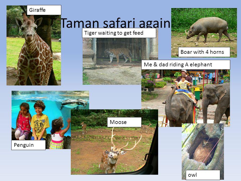 Taman safari again Komodo dragon Elephant & family Grey Crowned Crane Springbok Bear sitting