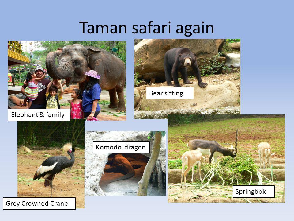 Taman safari Feeding hippos crocodiles Me &baby Orangutan Olan Lion sitting on rock Malayan Tapir Elephant & baby