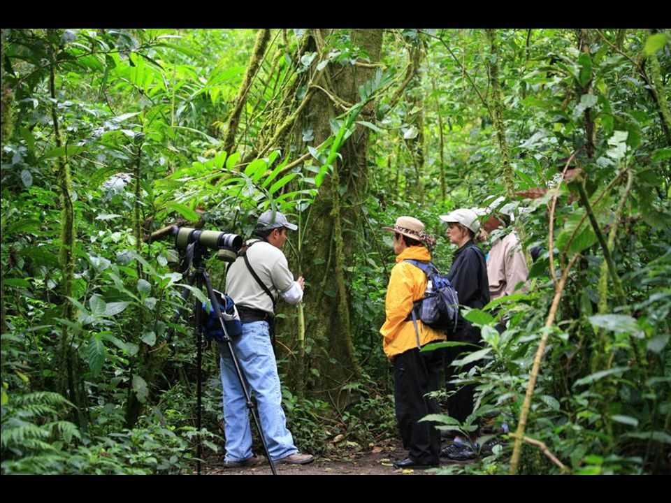 The Monteverde Cloud Forest Biological Reserve.