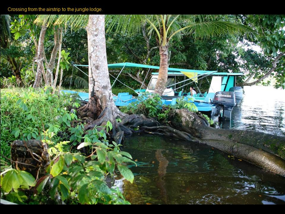 The Tortuguero National Park consists of a system of Jungle Canals and a village.