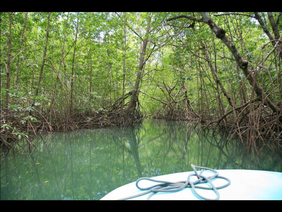 Going for a tour of the Mangrove canals of the estuary next to Manuel Antonio on the Pacific coast.