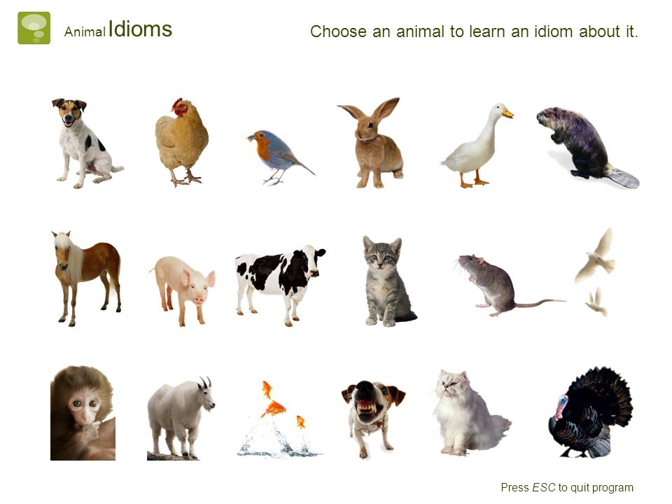 Choose an animal to learn an idiom about it. Animal Idioms Press ESC to quit program
