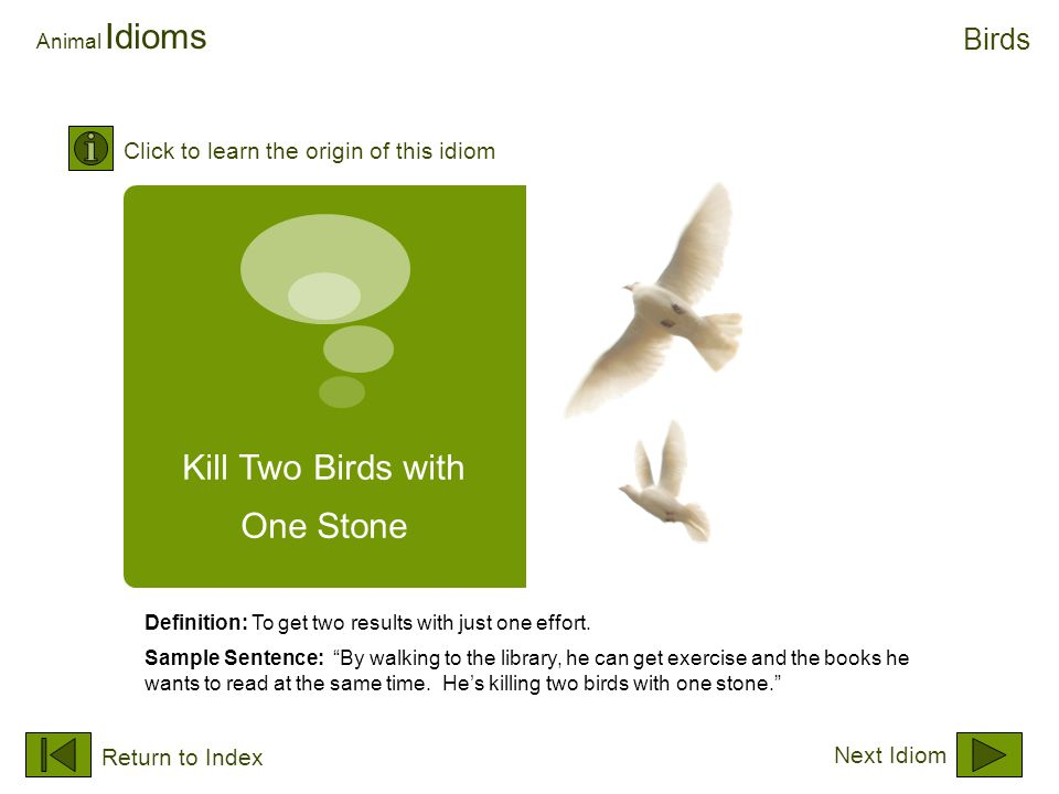 "Kill Two Birds with One Stone Animal Idioms Definition: To get two results with just one effort. Sample Sentence: ""By walking to the library, he can g"