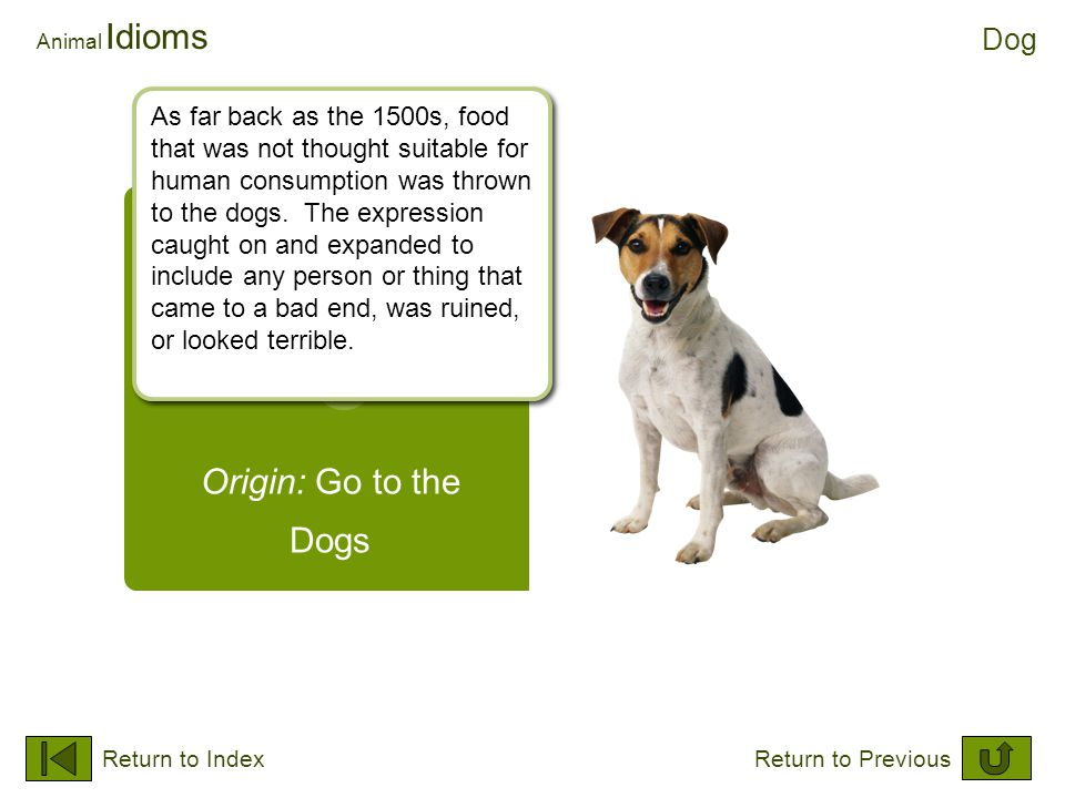 Origin: Go to the Dogs Animal Idioms Dog Return to IndexReturn to Previous As far back as the 1500s, food that was not thought suitable for human cons