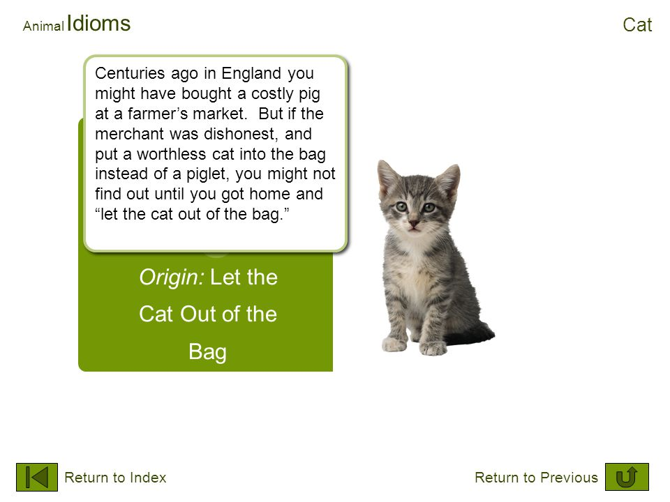 Origin: Let the Cat Out of the Bag Animal Idioms Cat Return to IndexReturn to Previous Centuries ago in England you might have bought a costly pig at