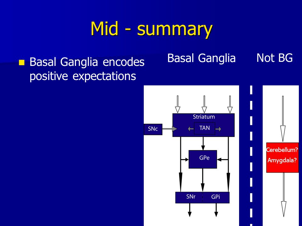 19 Mid - summary Basal Ganglia encodes positive expectations Basal Ganglia Not BG Cerebellum? Amygdala?