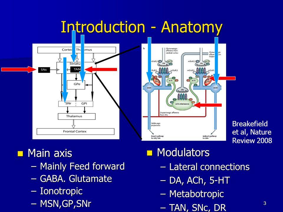 3 Introduction - Anatomy Main axis Main axis –Mainly Feed forward –GABA. Glutamate –Ionotropic –MSN,GP,SNr Modulators Modulators –Lateral connections