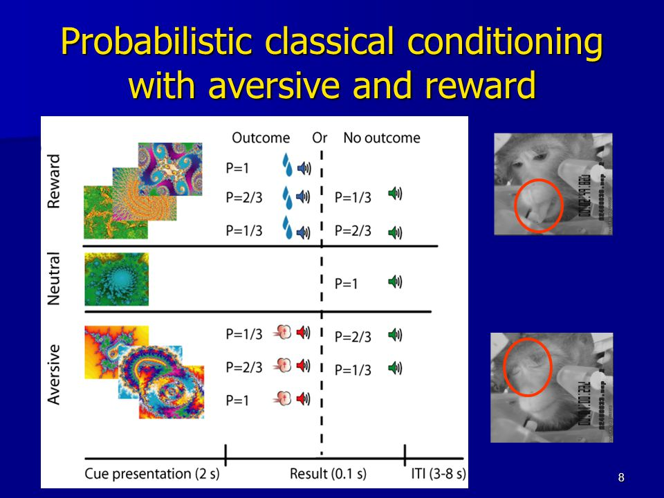 8 Probabilistic classical conditioning with aversive and reward