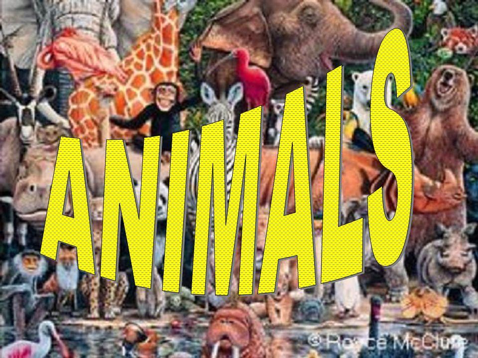 FLYING ANIMALS LAND ANIMALS WATER ANIMALS EXIT