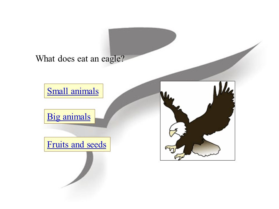 What does eat an eagle Fruits and seeds Big animals Small animals