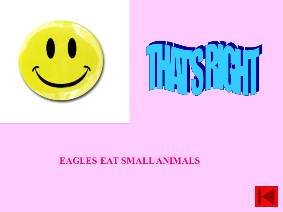 EAGLES EAT SMALL ANIMALS