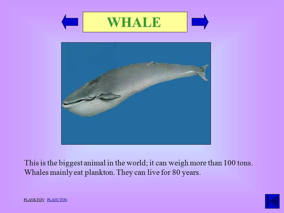 WHALE This is the biggest animal in the world; it can weigh more than 100 tons.