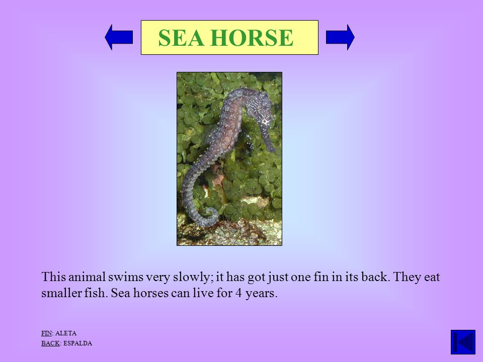 SEA HORSE This animal swims very slowly; it has got just one fin in its back.