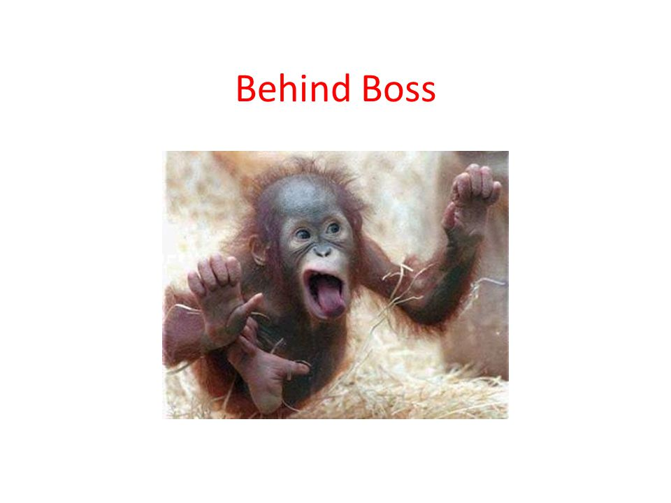 Behind Boss