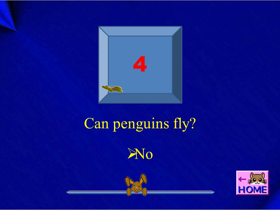 4 Can penguins fly  No