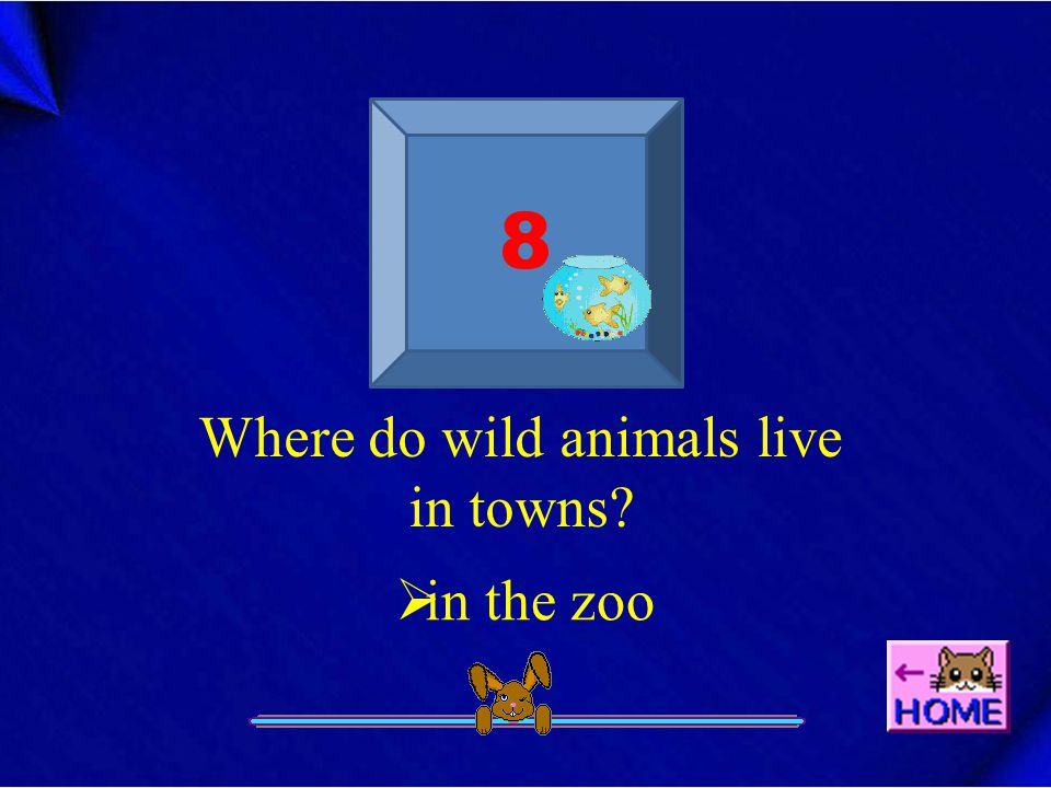 8 Where do wild animals live in towns?  in the zoo