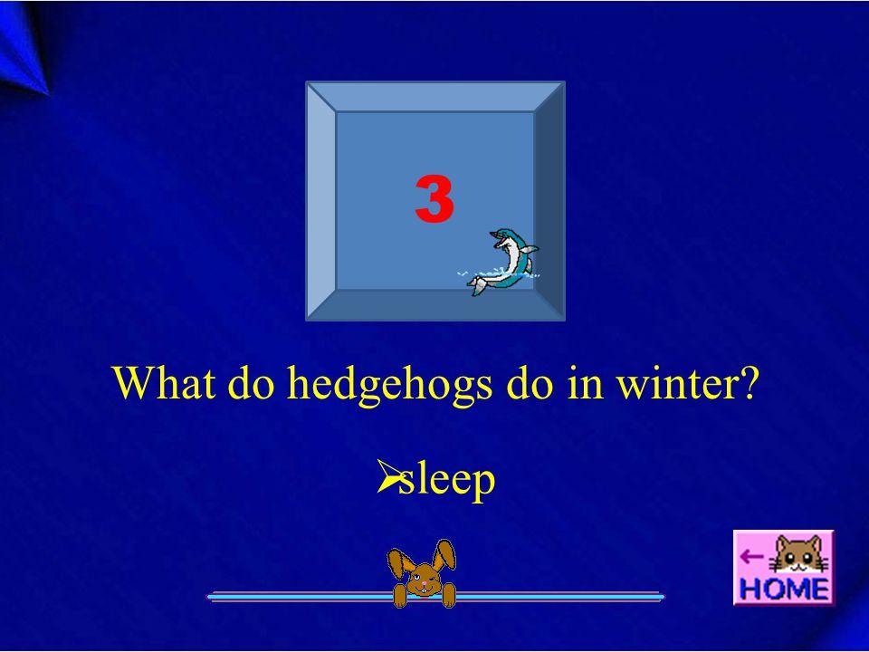 3 What do hedgehogs do in winter?  sleep