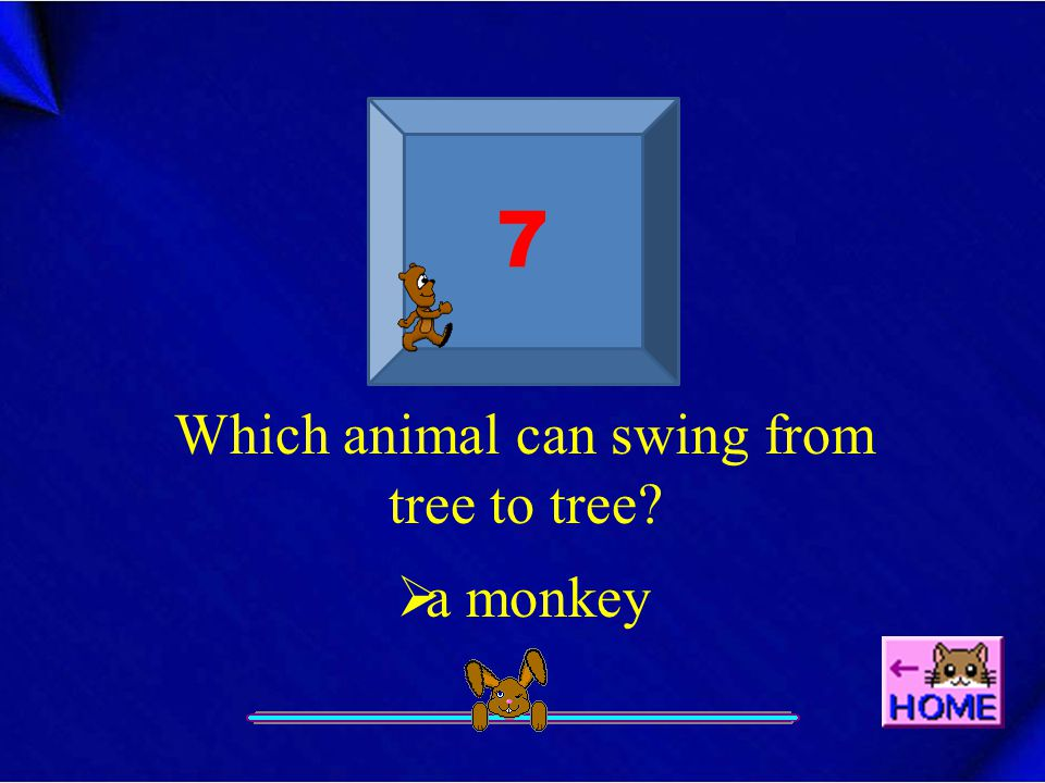 7 Which animal can swing from tree to tree?  a monkey