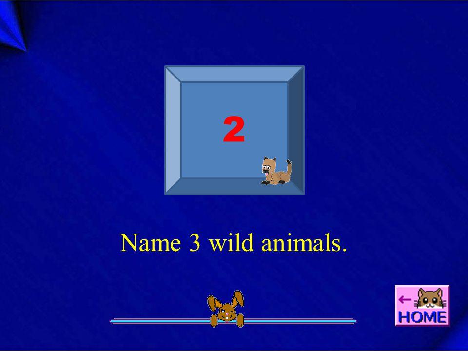 Name 3 wild animals. 2
