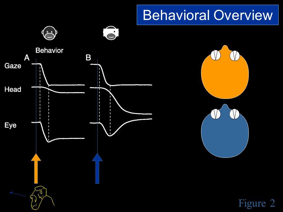 Figure 2 Behavioral Overview