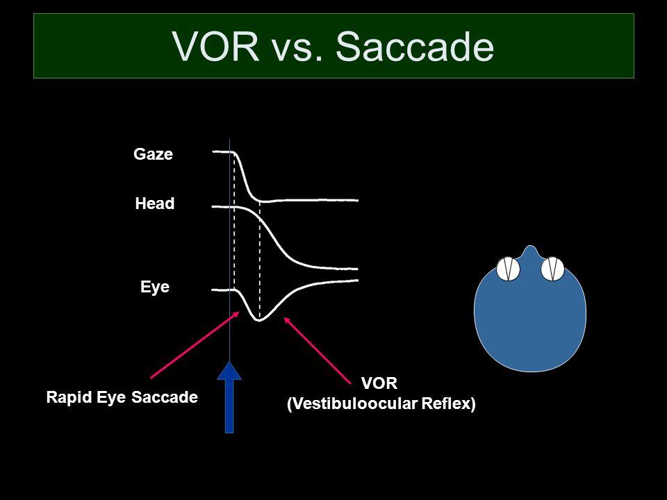 VOR vs. Saccade VOR (Vestibuloocular Reflex) Rapid Eye Saccade Gaze Head Eye