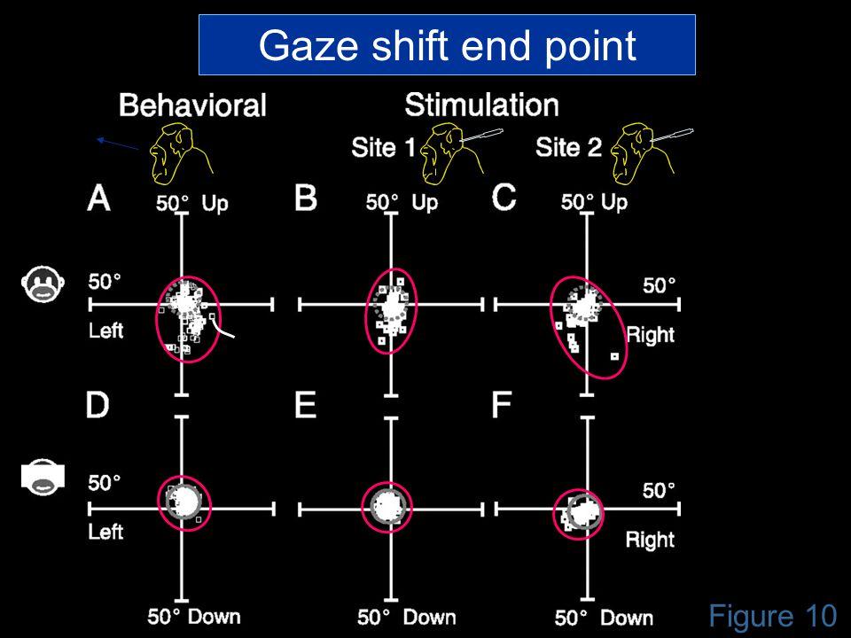 Figure 10 Gaze shift end point
