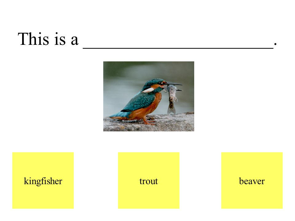 This is a kingfisher. It is a bird that flies above the pond.