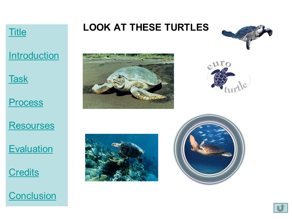Title Introduction Task Process Resourses Evaluation Credits Conclusion LOOK AT THESE TURTLES