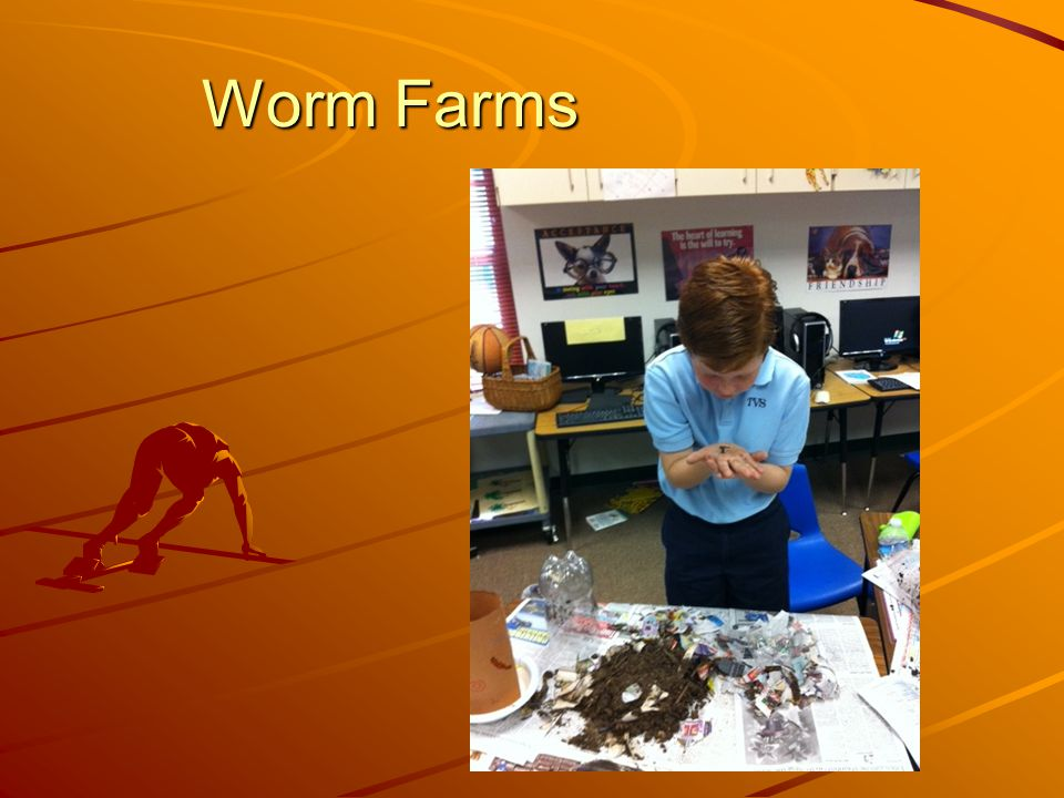 Worm Farms