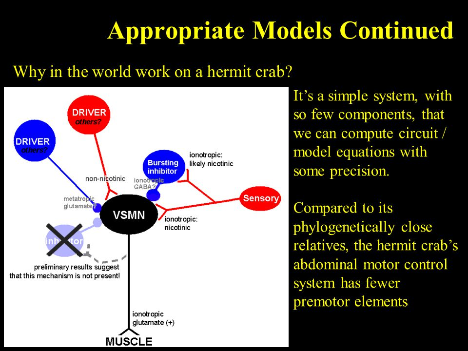 Appropriate Models Continued Why in the world work on a hermit crab.