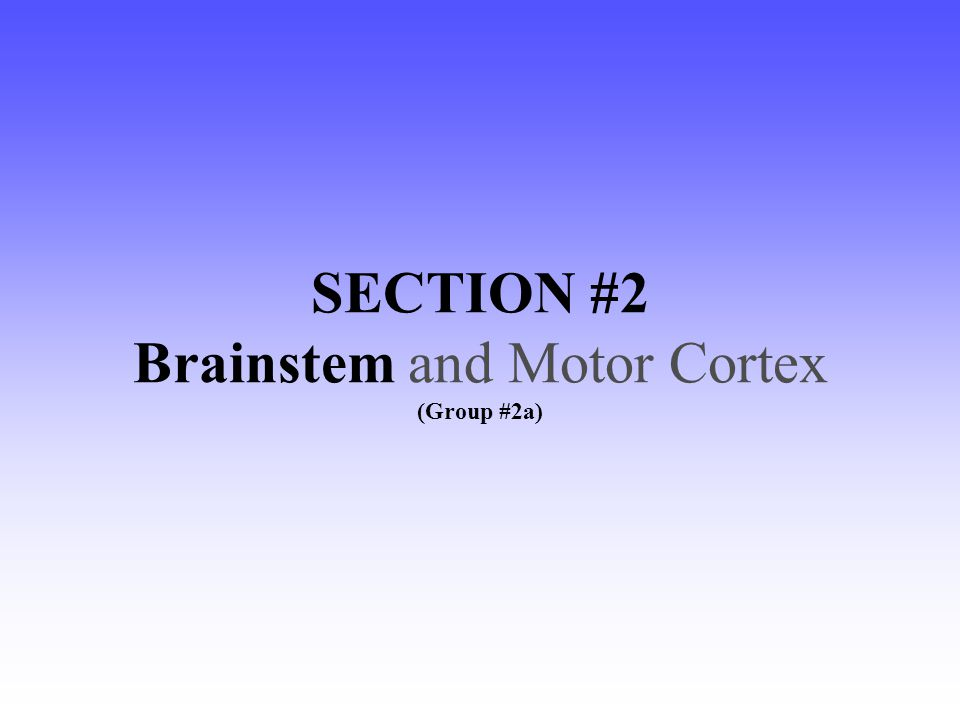 SECTION #2 Brainstem and Motor Cortex (Group #2a)