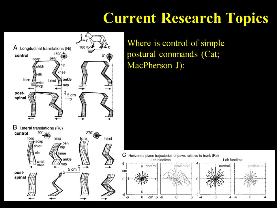 Current Research Topics Where is control of simple postural commands (Cat; MacPherson J):