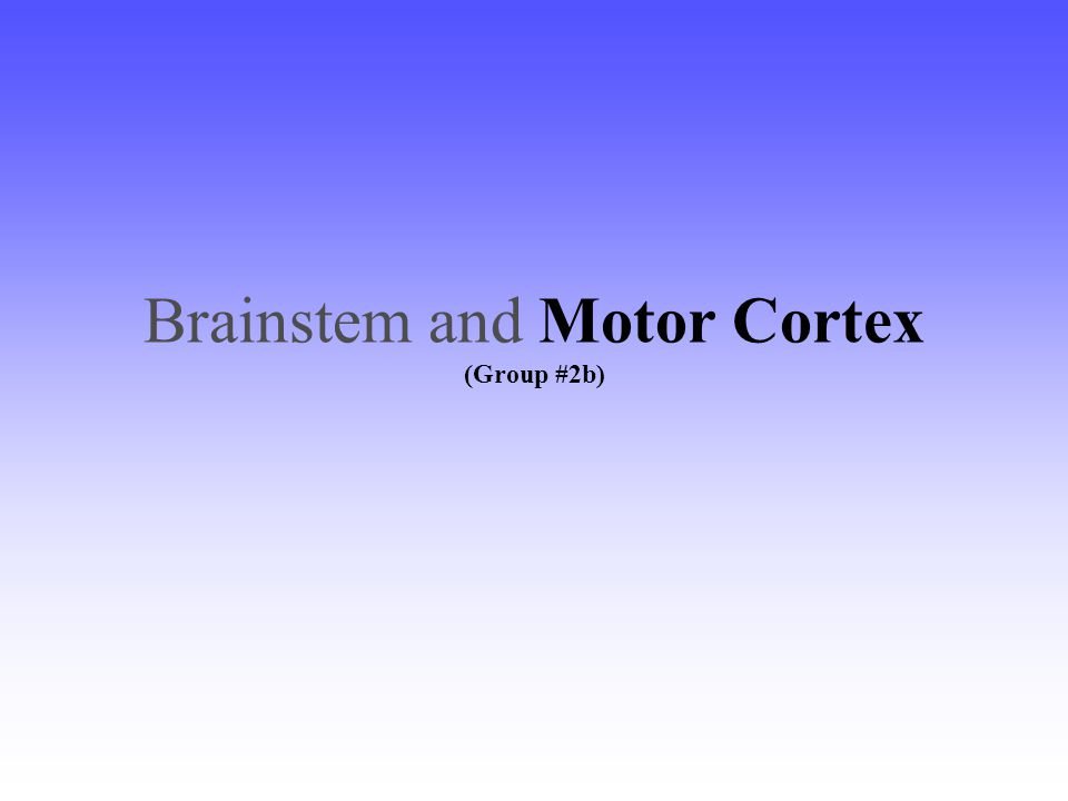 Brainstem and Motor Cortex (Group #2b)