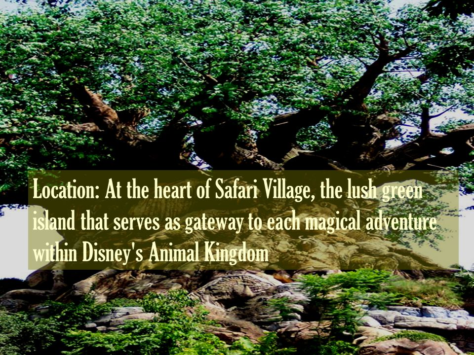 Location: At the heart of Safari Village, the lush green island that serves as gateway to each magical adventure within Disney s Animal Kingdom