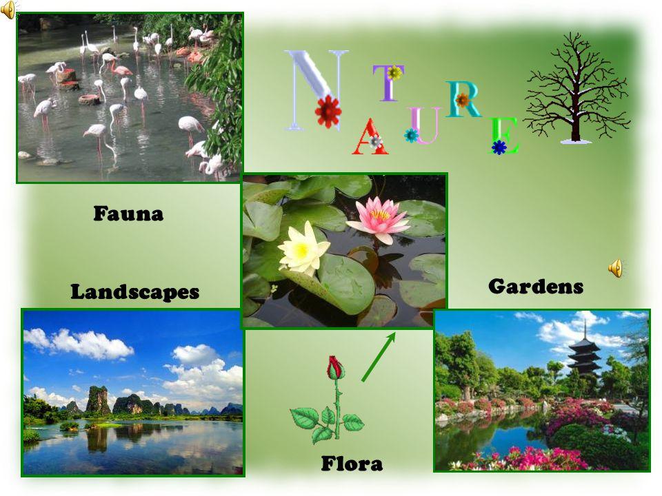 Fauna Flora Landscapes Gardens