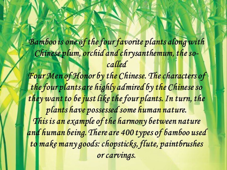 Bamboo is one of the four favorite plants along with Chinese plum, orchid and chrysanthemum, the so- called Four Men of Honor by the Chinese.