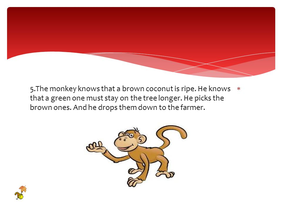  5.The monkey knows that a brown coconut is ripe.