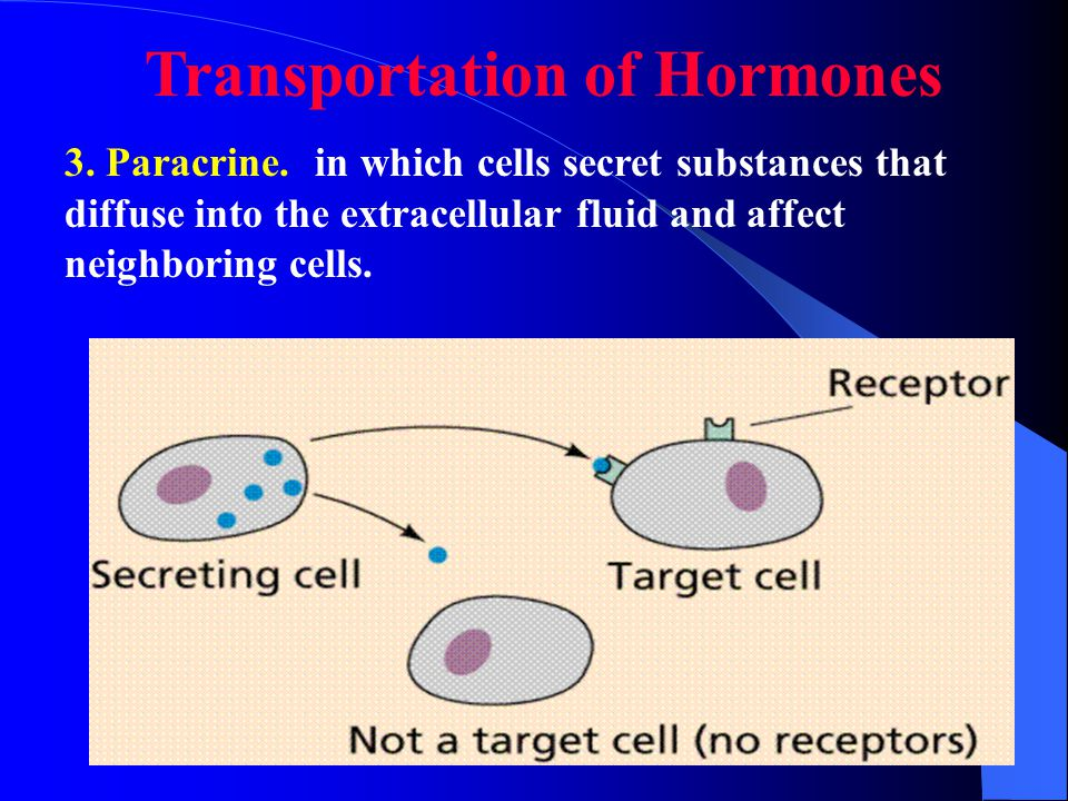 2.Neuroendocrine: neurons secrete substances (neurohormones) that reach the circulating blood and influence the function of cells at another location