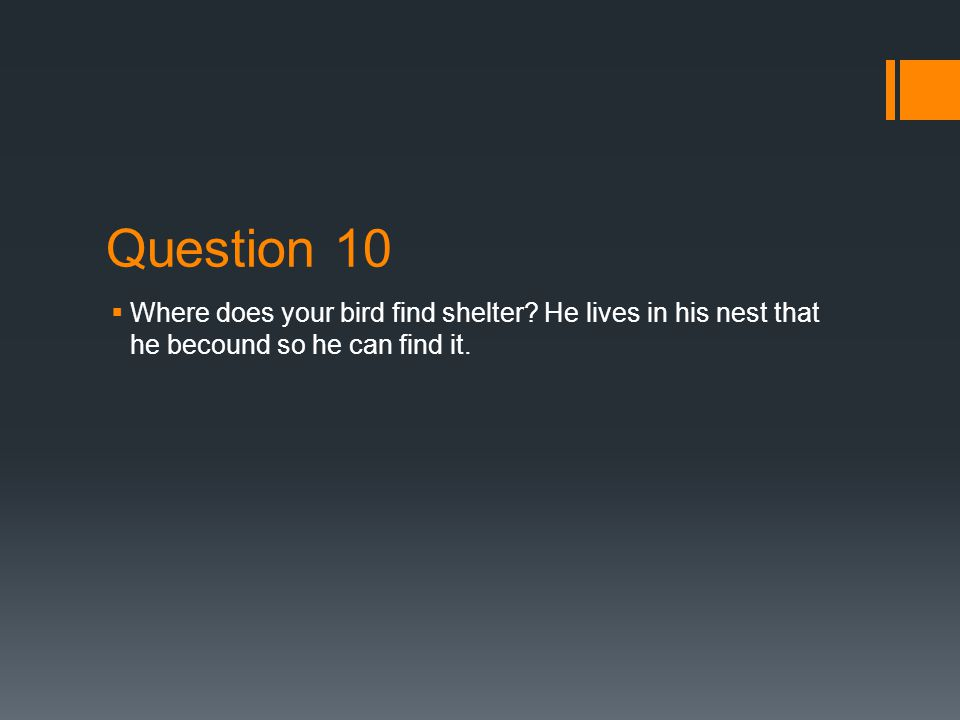 Question 9 9. What special adaptations will your bird have to get water.