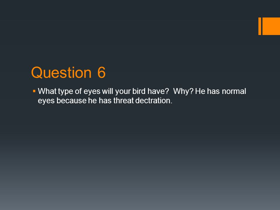 Question 6  What type of eyes will your bird have.