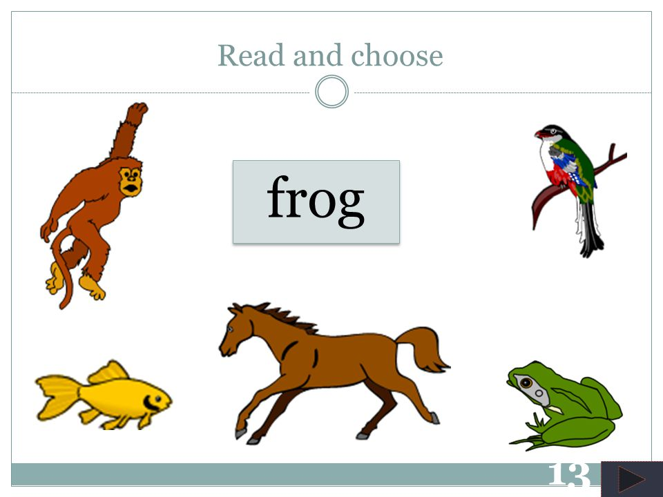 horse Read and choose 12
