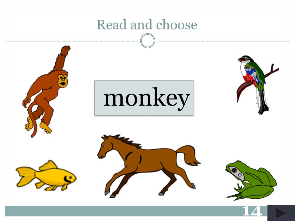 frog Read and choose 13