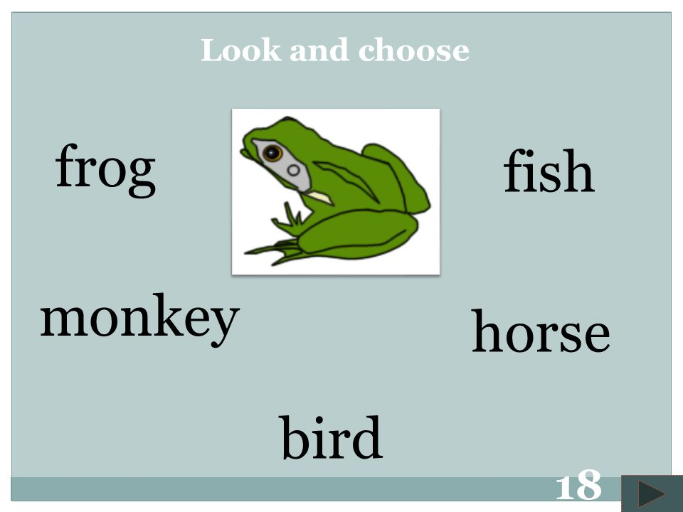 bird frog horse fish monkey Look and choose 17