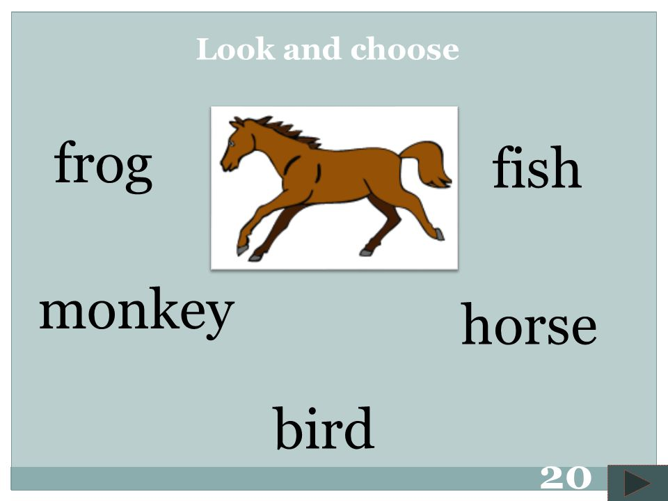 monkey bird frog horse fish Look and choose 19