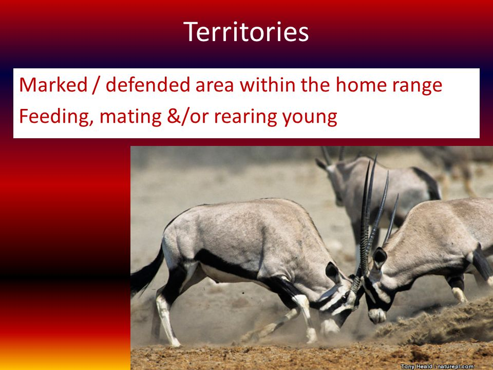 Territories Marked / defended area within the home range Feeding, mating &/or rearing young