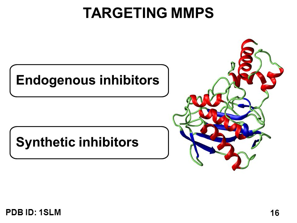 TARGETING MMPS PDB ID: 1SLM Endogenous inhibitors Synthetic inhibitors 16